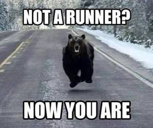 bear, funny, and humor image