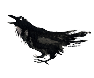 bird, black, and crow image