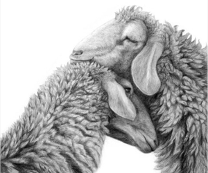 drawing, love, and fur image