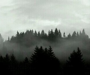 forest, grunge, and woods image