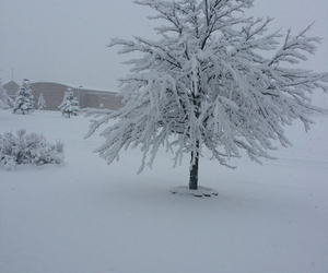 cold, cool, and tree image