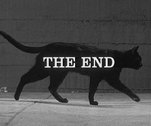 cat, the end, and black image