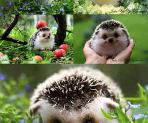 animal, hedgehog, and sweet image