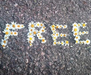 free, flowers, and daisy image