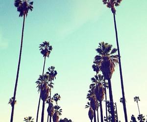 beautiful, palm trees, and california image