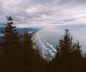 forest, sky, and landscape image