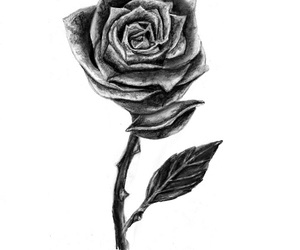 flower, rose, and Harry Styles image