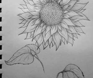 drawing, shading, and sunflower image