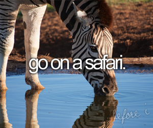 safari, before i die, and quote image