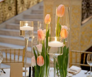 tulips and boda image