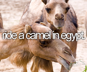 camel, before i die, and egypt image