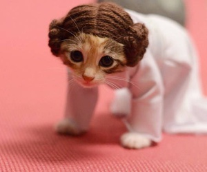 cat, star wars, and cute image