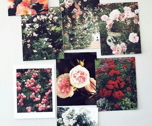 flowers, photo, and rose image