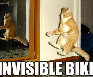cat, funny, and bike image