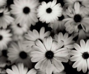 beautiful, black, and flowers image
