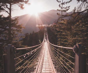 bridge, nature, and travel image