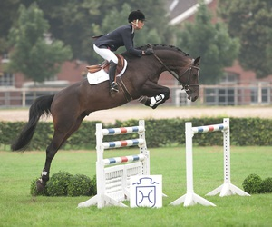 champion, equestrian, and horse image