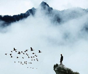 birds, nature, and travel image