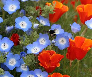 blue, blue flowers, and lovely image