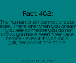fact, Dream, and brain image