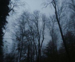 forest, dark, and grunge image