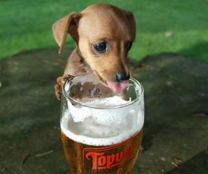 beer, dog, and puppy image