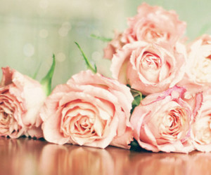 roses and cute image