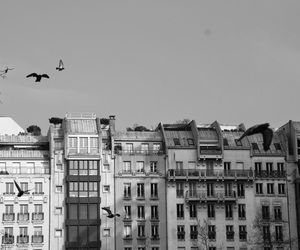 architecture, black and white, and paris image