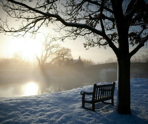 bench, snow, and tree image