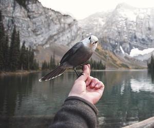 bird, nature, and mountains image