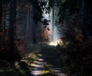 forest, nature, and woods image