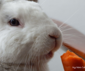 adorable, bunny, and eat image