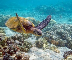 life, water, and turtle image