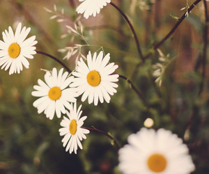 flowers, colors, and vintage image