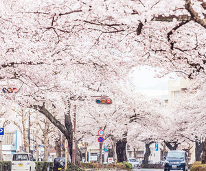 amazing, cherryblossom, and japan image