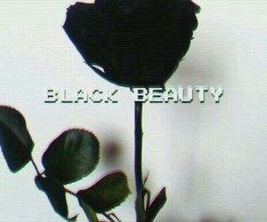 black, rose, and beauty image