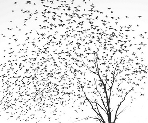 birds and tree image