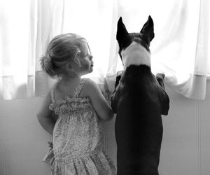 animals, beautiful, and boston terrier image