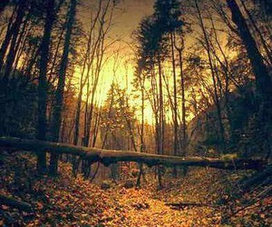colors, light, and forest image