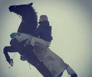 andorra, beautiful, and horse image