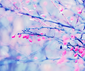 pink, blossom, and easter image
