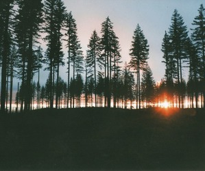 forest, nature, and sunset image