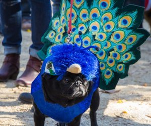 costume, dog, and feathers image