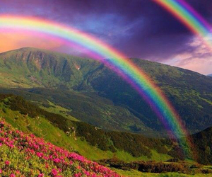 rainbow, nature, and flowers image