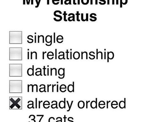 cats, Relationship, and single image