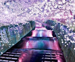 pink, purple, and spring image
