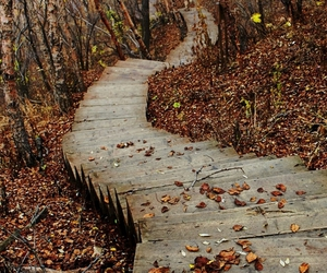 fall, nature, and stairs image