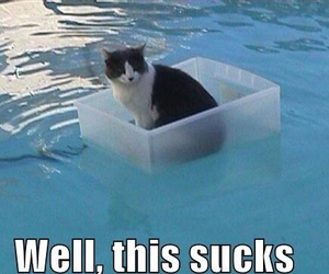 cat, funny, and swimming pool image