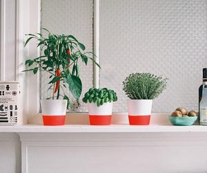 plants, alternative, and grunge image