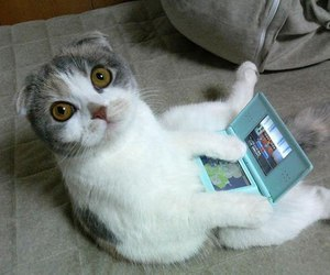 cat, funny, and nintendo image